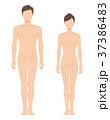 前を向いた男女の身体(主線なし) 37386483