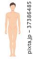 前を向いた男性の身体(主線なし) 37386485