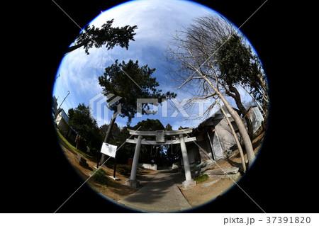 法目のオビシャ、的、八幡神社、千葉県白井市 37391820