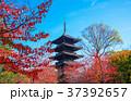 東寺 紅葉 京都の写真 37392657