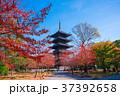 東寺 紅葉 京都の写真 37392658
