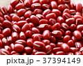 小豆 あずき アズキ 豆  37394149