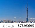 《東京都》スカイツリーを望む・爽やかな朝の風景 37395695