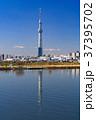 《東京都》スカイツリーを望む・爽やかな朝の風景 37395702