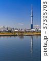 《東京都》スカイツリーを望む・爽やかな朝の風景 37395703