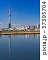 《東京都》スカイツリーを望む・爽やかな朝の風景 37395704