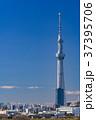 《東京都》スカイツリーを望む・爽やかな朝の風景 37395706