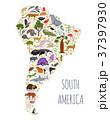 南米大陸 フローラ 植物相のイラスト 37397930