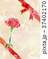 カード カーネーション 花のイラスト 37402170