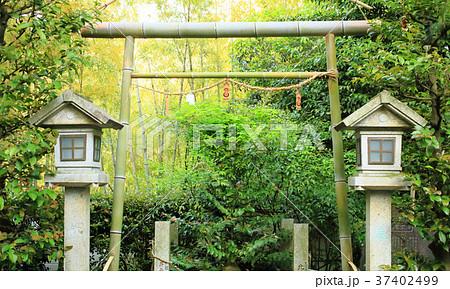 竹の鳥居 37402499