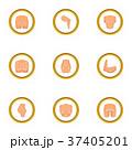 プラスチック プラスティック 手術のイラスト 37405201