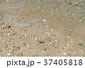 波打ち際 ビーチ 海の写真 37405818