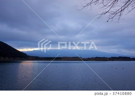 夕暮れの田貫湖からの富士山(曇り) 37410880