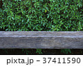 Old wooden bench with green leaf background 37411590