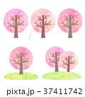 桜の木 春 桜のイラスト 37411742
