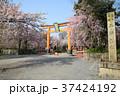 春、桜の平野神社 37424192