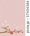 梅 鶯 春のイラスト 37434384