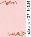 梅 鶯 春のイラスト 37434386