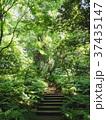 木洩れ日の森 37435147