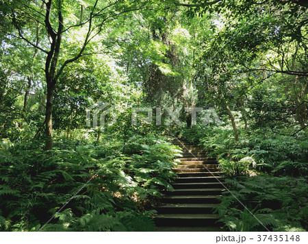 木洩れ日の森 37435148