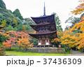 西明寺の三重塔 37436309