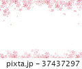 春 桜 背景  水彩 イラスト 37437297