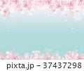 春 桜 背景 水彩画 37437298