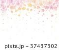 春 桜 背景 水彩画 水彩 イラスト 37437302