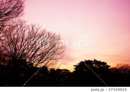 冬の雑木林の夕暮れ 37439920