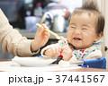 離乳食 育児 赤ちゃんの写真 37441567