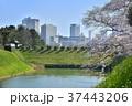皇居半蔵門と濠に桜とビル群 37443206