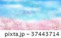 桜 満開 桜並木のイラスト 37443714