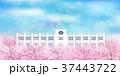 桜 学校 桜並木のイラスト 37443722