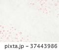 桜 和紙 和のイラスト 37443986