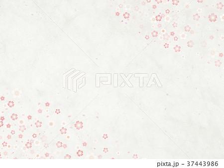 和モダン 白和紙 桜吹雪 37443986