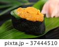 寿司 ウニ 37444510