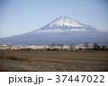 静岡県静岡市 富士山と東海道新幹線 37447022