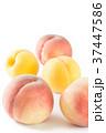 黄金桃と白桃 37447586