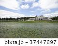秋田県横手市 鶴ヶ池とスイレン 37447697