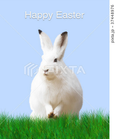 Easter, rabbit, green meadow, blue background 37448976