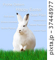Easter, rabbit, green meadow, blue background 37448977