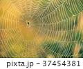 朝露とクモの巣-19017 37454381