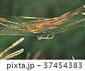 虹色に輝くクモの巣-19020 37454383