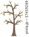 枯れ木 37459289