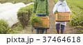 農家の女性と外国人男性 37464618