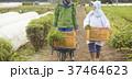農家の女性と外国人男性 37464623