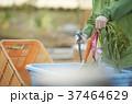 野菜を洗浄する男性  37464629