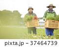 男性 外国人 農家の写真 37464739