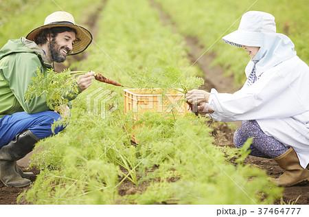 野菜 収穫 農家の女性と外国人男性 37464777