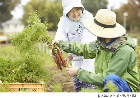 野菜 収穫 農家の女性と外国人男性 37464782